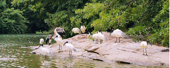 Ranganathittu India Birding Tour